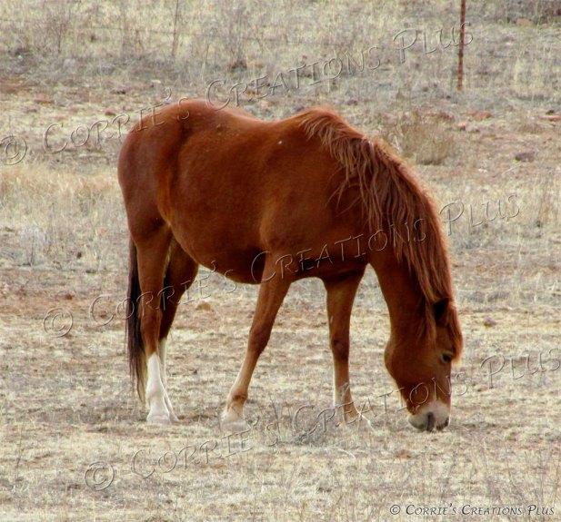 Horse grazing peacefully near Sonoita, Arizona