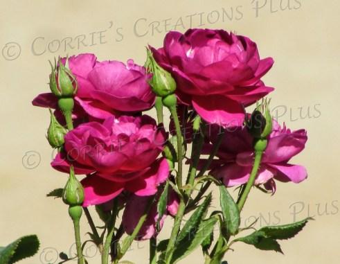 Bouquet of roses; taken in Tucson