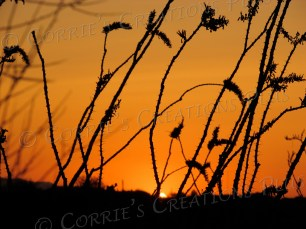 An ocotillo adorns the landscape in a Saguaro National Monument sunset.