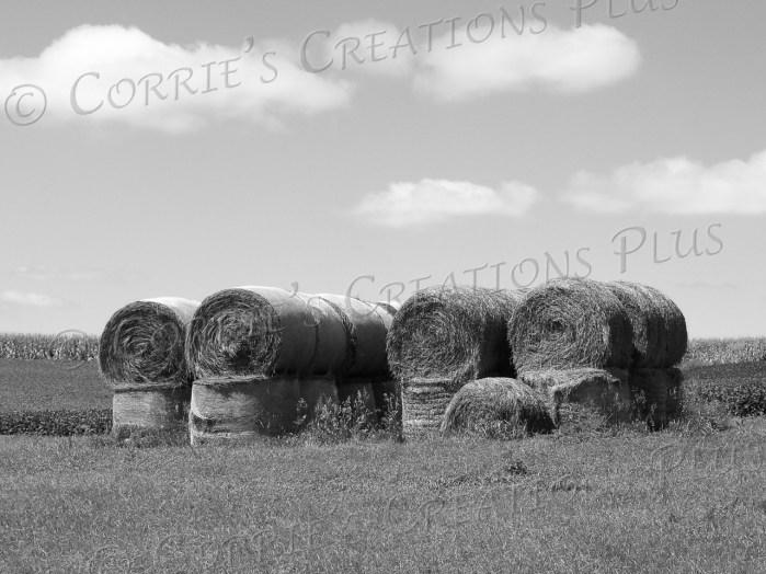 Round hay bales grace the farming landscape in southeastern Nebraska.