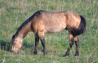 A horse grazes on a farm in southeastern Nebraska.