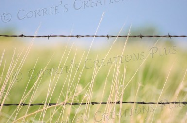 Prairie grass sways gently in front of a barb-wire fence in southeastern Nebraska.
