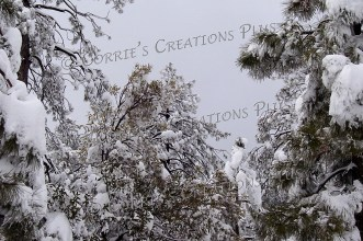 Wintertime in the Catalina Mountains