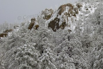 I took a lot of beautiful snow photos on this photo shoot in the Catalina Mountains.