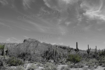 Sabino Canyon in southeastern Arizona; photo taken in one-point setting
