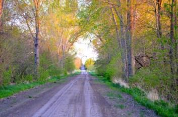 A country road in southeastern Nebraska