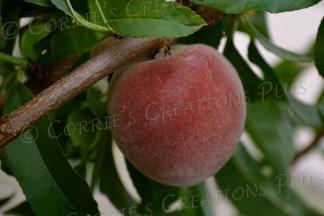 Peach fuzz!