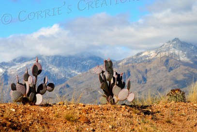 Prickly pear cacti grace the foreground, with the Catalina Mountains in the background; Tucson
