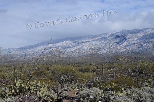 Southeastern Arizona in winter