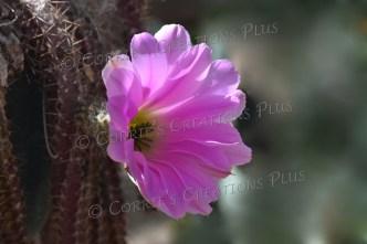 Photo taken in Tucson, Arizona