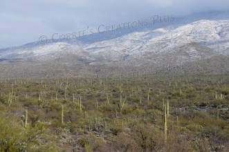 Saguaro National Park located in southeastern Arizona