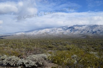 Beautiful shot of snow in the desert; southeastern Arizona