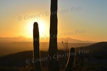 Saguaro sunset in southeastern Arizona