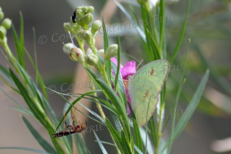 Can you find all three insects/butterflies in this photo?