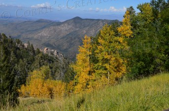 Fall colors are stunningly beautiful in the Catalina Mountains, southeastern Arizona.