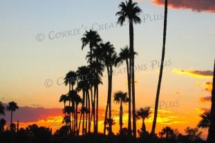 Palm-tree sunset; taken in Tucson