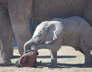Nandi was born at the Tucson Zoo on August 20, 2014. What a cutie!