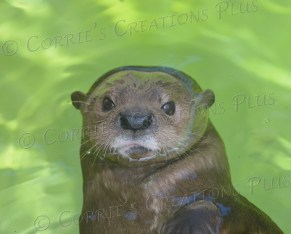 Notice the water line and the whiskers in this photo of an otter.