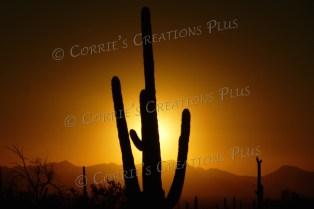 Taken near Saguaro National Monument (west) in southeastern Arizona