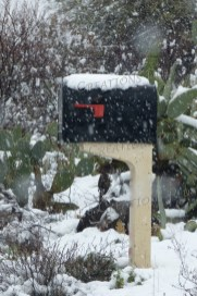 Tucson experienced six hours of snow (a rarity) in February 2019.