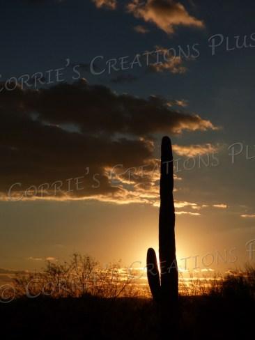 A silhouetted saguaro cactus, Tucson, Arizona