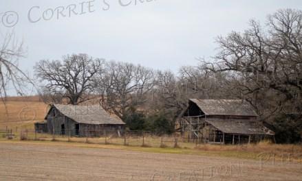Side-by-Side. Two abandoned farm buildings in southeastern Nebraska