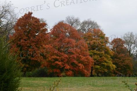 Autumn in southeastern Nebraska; photo taken south of Omaha