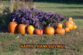 Happy Thanksgiving! Photo taken in southeastern Nebraska