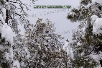 Winter Wonderland in the Catalina Mountains