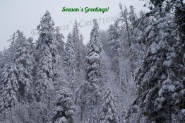 Season's Greetings from the Catalina Mountains in southeastern Arizona