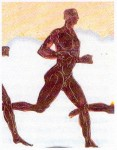 podismo,cardiopatia,cardiomiopatia,maratoneta,filippide,sport,corsa,running