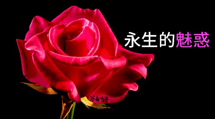 死亡哲學淺說︰永生的魅惑 16