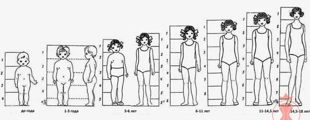 Introduction to the Theory. Children's Body Proportions