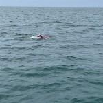 Dall'Irlanda alla Scozia a nuoto: North Channel conquistato per Luca Pozzi