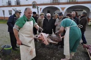 Matanza del Cerdo Ibérico en Monesterio (Badajoz)