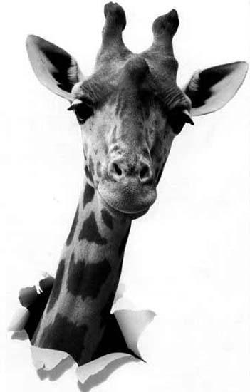 Rpulsif Anti Girafe Ou Preuve Par Labsence Collectif