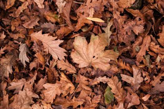 Olor a hojas mojadas