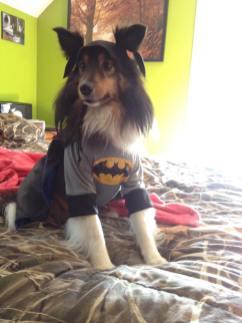 BatMax (Haley Ballard)