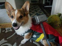 Thor the Thorgi (Chris Lazzaro)