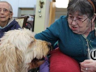 Sadie the goldendoodle visiting residents at Cortland Park Nursing and Rehabilitation