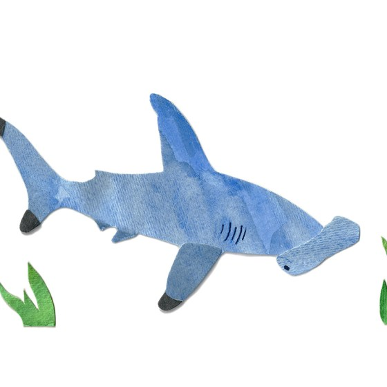 Hammerhead Shark Assembled Watercolor Print by Cortney North