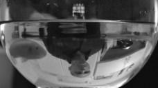 MahiVaMan-96