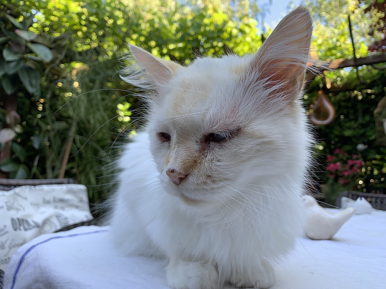 Cat Bernd