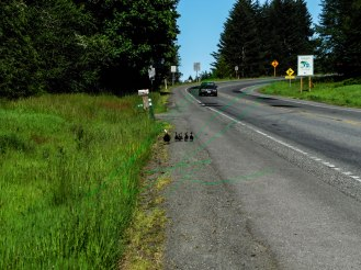 Cory-Castillon-Ducks-Hwy