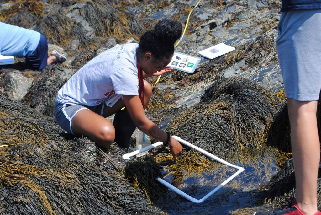 A young girl working in a tidepool in Nahant.