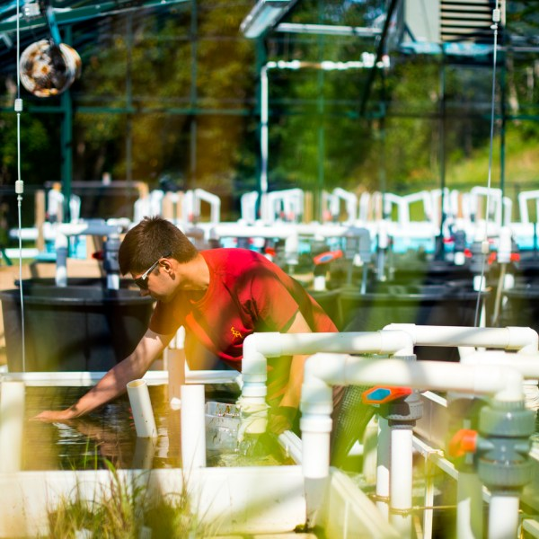 A student works in the greenhouse at the Marine Science Center.