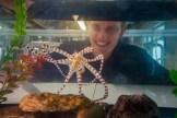 Matt Everett and the wonderpus octopus. Photo by Tim Briggs