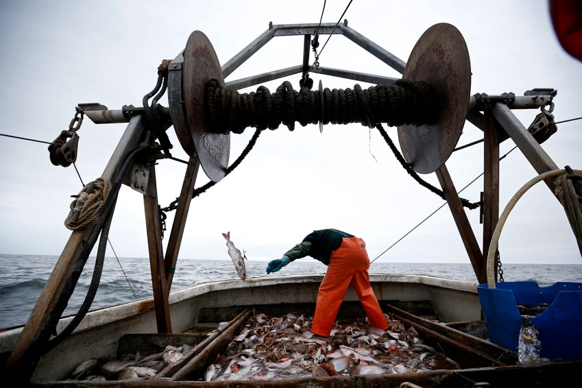 In this April 23, 2016, photo David Goethel sorts cod and haddock while fishing aboard his trawler off the coast of New Hampshire. To Goethe, cod represents his identity, his ticket to middle class life, and his link to one the country's most historic industries, a fisherman who has caught New England's most recognized fish for more than 30 years. (AP Photo/Robert F. Bukaty)