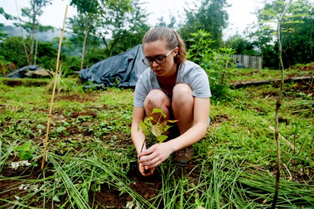 Jessica Slevin mulches and adds compost with vetiver inga tree to plants at nursery.