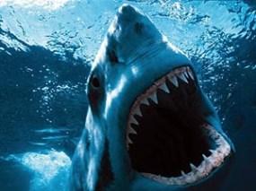 FORO ESCUELA BOLSA Tiburon.jpg?zoom=1